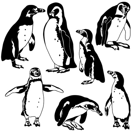 Penguin Collection