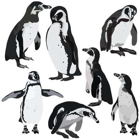 Penguin Collection Vector