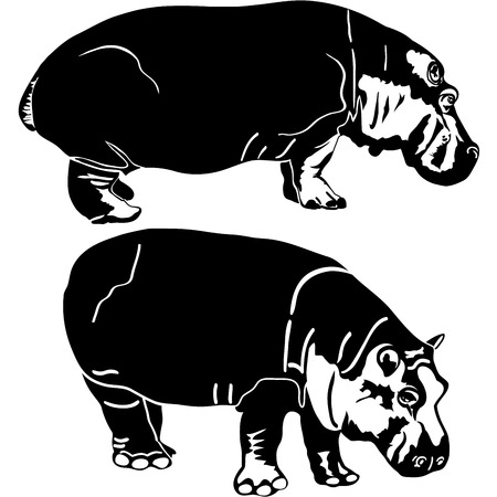 Vector illustration of hippopotamus animals