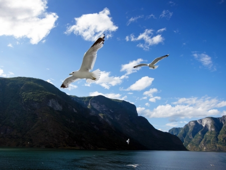 Sogne fjord in the north of Norway.