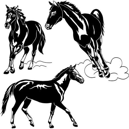 horses running: Vector illustration of horse animals