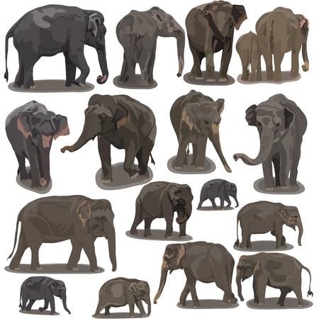 Elephants in Different Poses on white