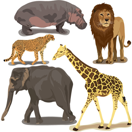 animals in the wild: Set With African Animals on white background
