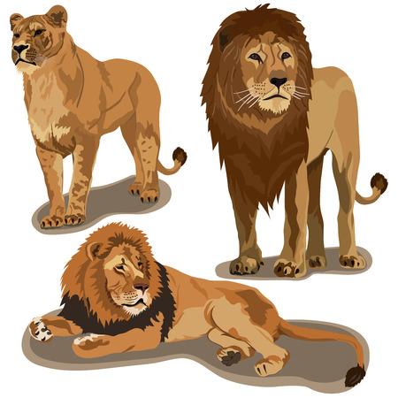 Set of lions on white background Illustration