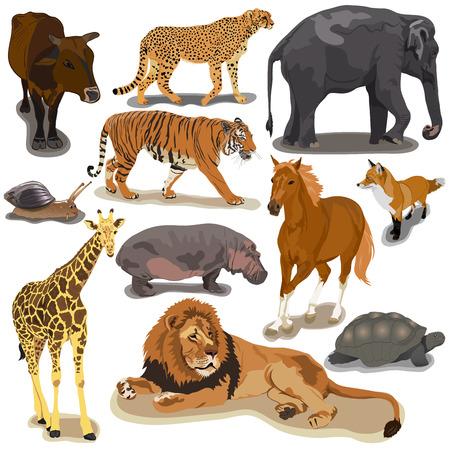 Набор животных на белом фоне