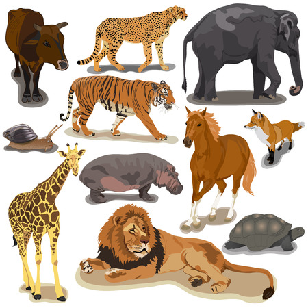 Set with animals on white background