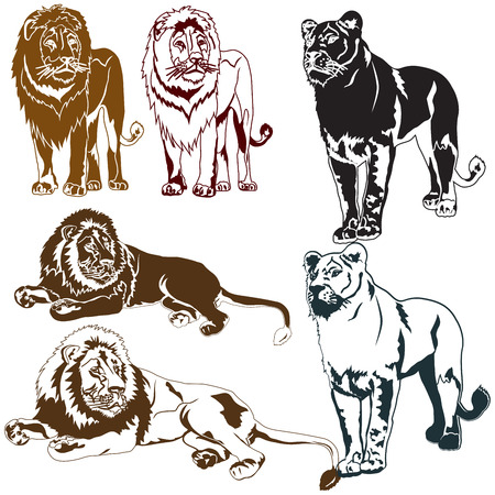 Set of lions on white background Illustration