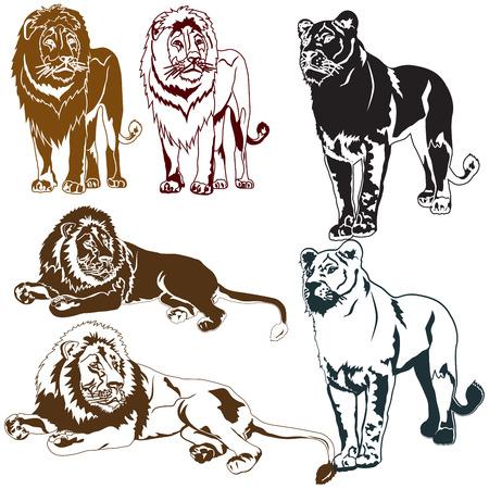 Set of lions on white background Ilustrace