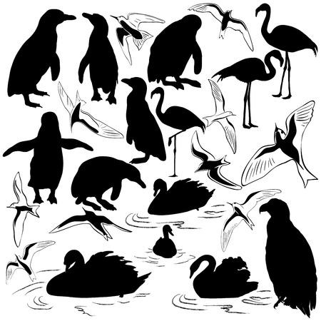 Набор векторных изображений птиц