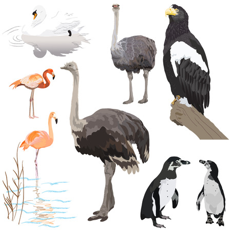 Set vector images of birds