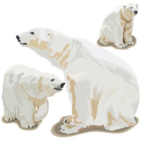 Set vector images of polar bears