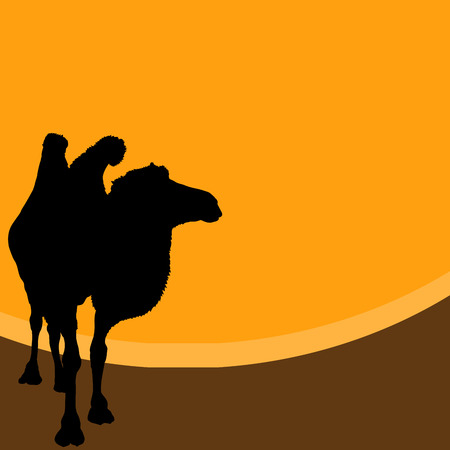 Vector illustration of a camel in the desert Illustration