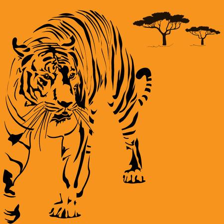 undomesticated: Big Tigger
