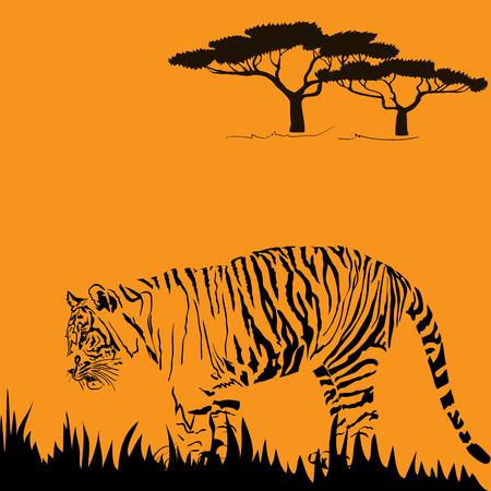 stealth: Detailed illustration of big tiger