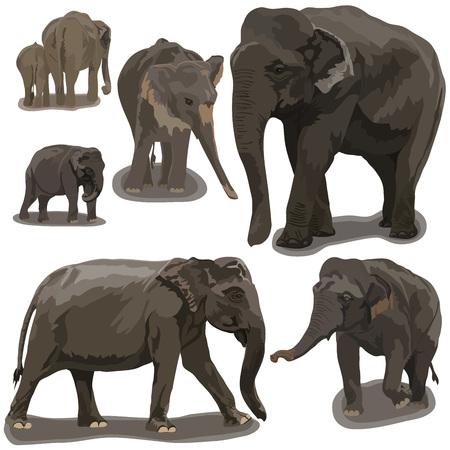 Слоны в разных позах на белом фоне