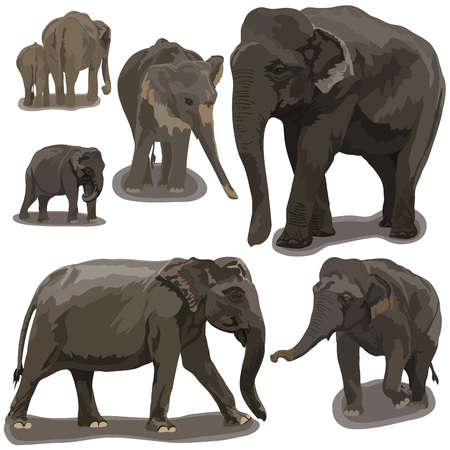 safari animals: Elephants in Different Poses on white background Illustration