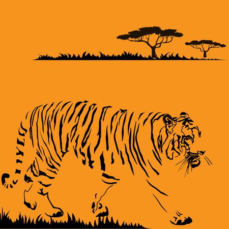 undomesticated cat: Detailed vector illustration of big tigger Illustration