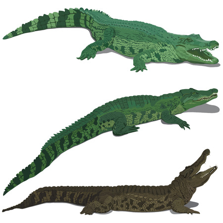 Set of crocodiles isolated on white background
