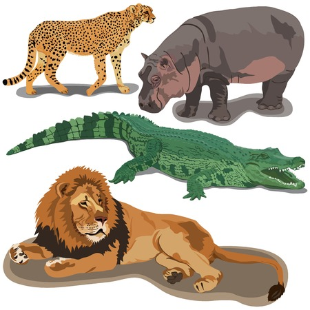 Set of African predators on white background Illustration