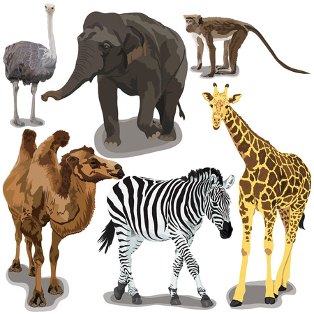 Set With African Animals on white background