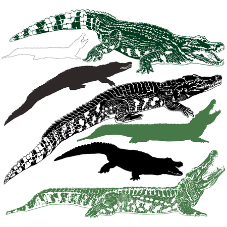 Collection silhouettes of crocodiles isolated on white background