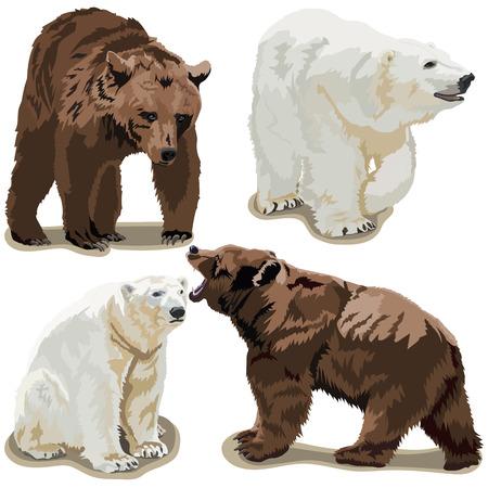 Polar and brown bears