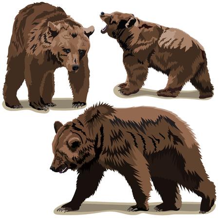 Set of brown bears