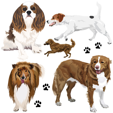Collection of dogs on white background