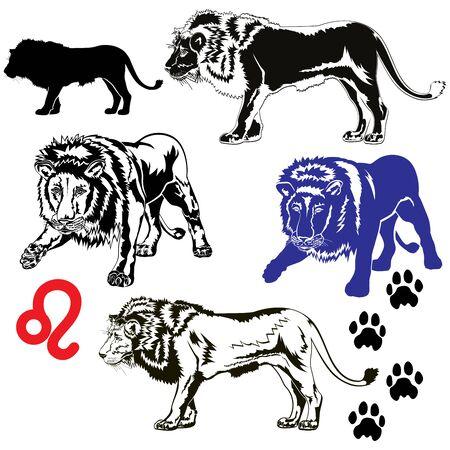 Set of Lions illustration