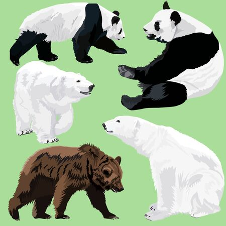 Polar, brown and panda bears