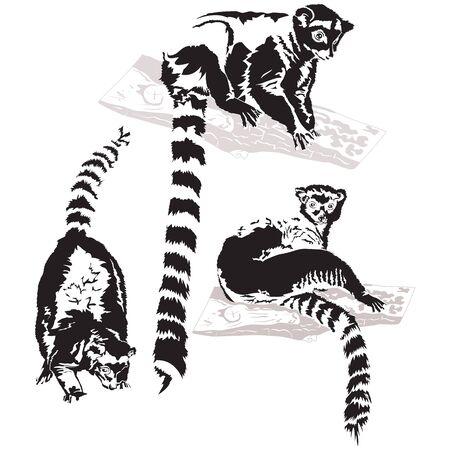 Set of vector Lemurs