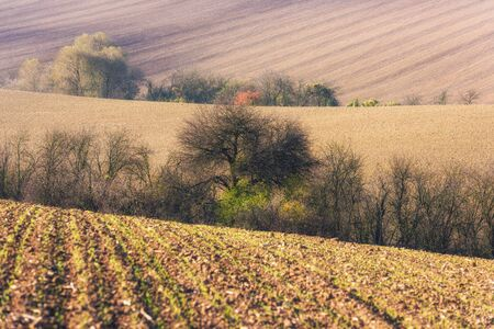 Field stripes and lines, nature agricultural background
