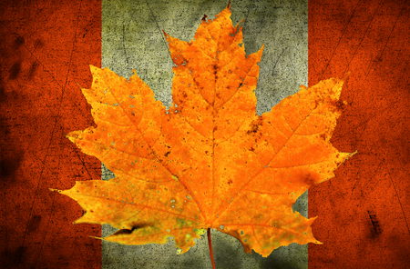 old flag: Autumn maple leaf. Canadian flag Stock Photo