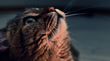 intrepid: Photo of the cat on a dark background