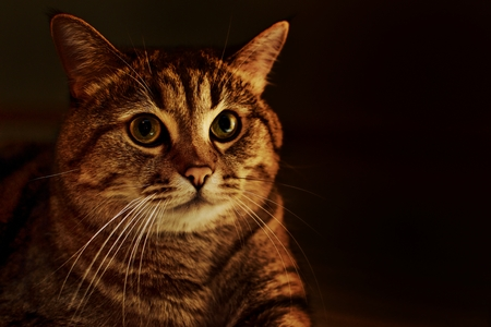 varmint: Photo of the cat on a dark background