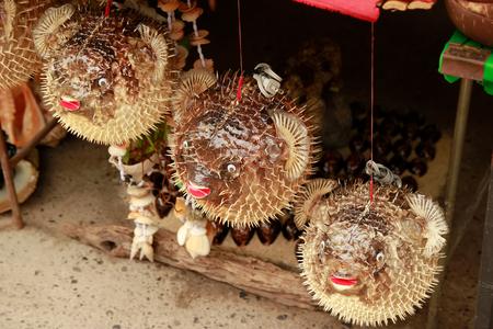 Blowfish or puffer fish in Souvenir shop. Porcupinefish.
