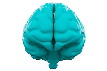 Blue Human brain on white background. Anatomical Model, 3d illustration.