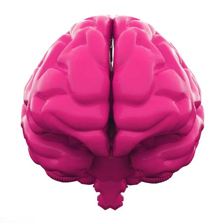 Pink Human brain isolated on white background. 3d illustration