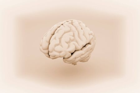 Human Brain, Anatomical Model. 3D illustration.