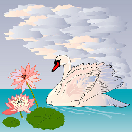Graceful and graceful Swan is swimming in the lake at sunset Vector