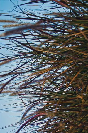 Blades of grass blowing horizontally in the wind.