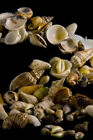 A bunch of ocean shells on a Black Background