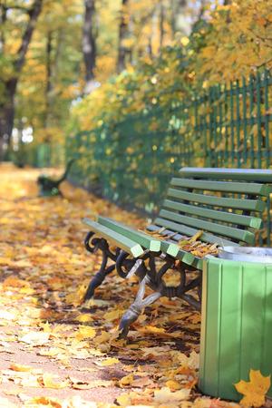 empty bench: Empty bench in autumn Summer garden, St. Petersburg, Russia Stock Photo
