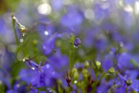 liverwort: Little spider on a purple background made of flowers, Liverwort Stock Photo
