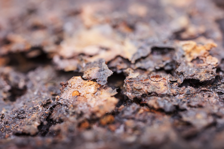 corrosion: Rust closeup. Structure of corrosion, texture close up