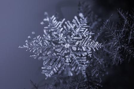 extreme macro: Extreme macro of snowflake crystal close up