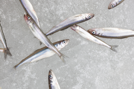 fresh water smelt: group of fresh smelt fish on the snow