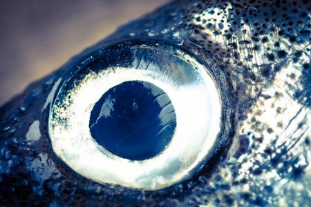 fish eye: smelt fish eye  close up toned photo Stock Photo