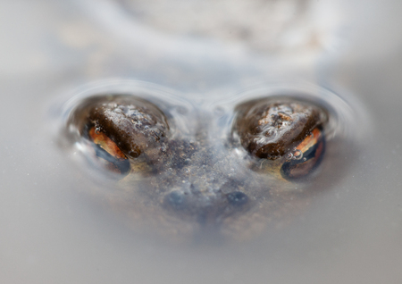 scum: look of frogs from under the dirty water macro closeup