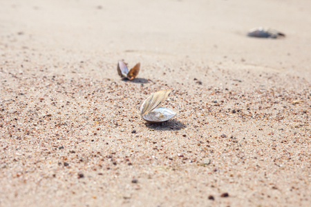 opalescent: empty shell of mollusk on the sandy beach, selective focus